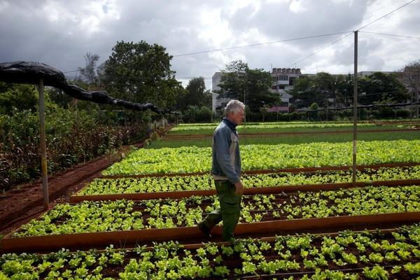 Le boom de l'agriculture cubaine à Cuba