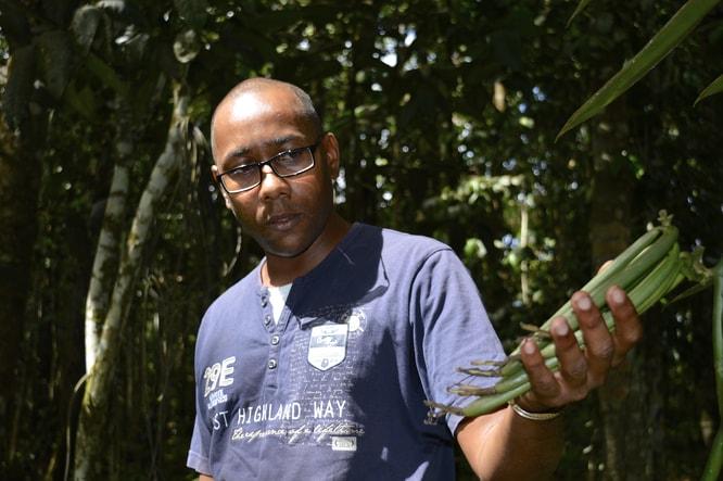 Vanille en Guadeloupe : dans l'exploitation de Laurent Chathuant