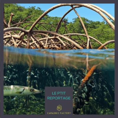La Guadeloupe, seule zone de réserve de la biosphère mondiale aux Petites Antilles