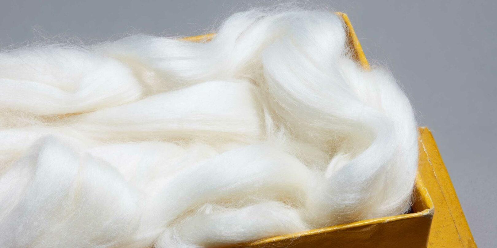 WISICA, association des producteurs du coton Sea Island