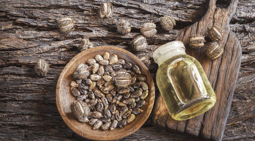 L'huile de ricin nouvelle richesse de la Jamaïque