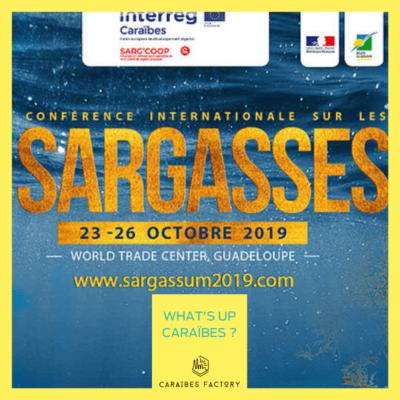 Une conférence internationale sur les sargasses, en Guadeloupe