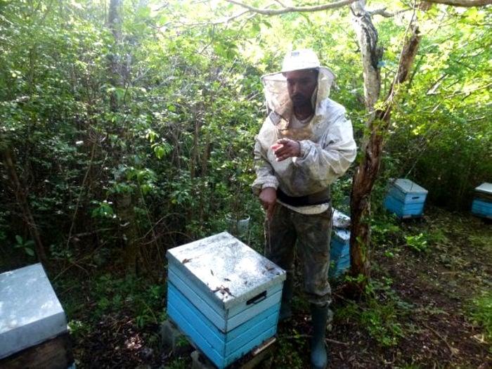 Tony Prudent apiculteur passionné
