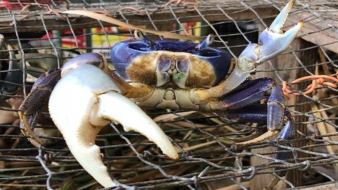 Aux Antilles, la tradition du crabe incontournable
